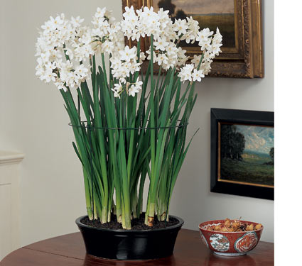 Plants make excellent christmas gifts always store un planted bulbs in a cool place between 40 50 deg f mightylinksfo