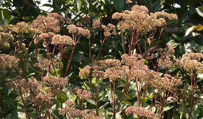 Late blooming perennials mightylinksfo